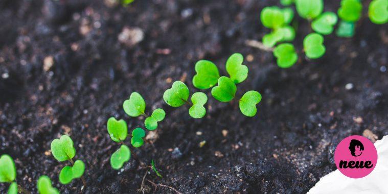 Urban Farming, How To Farm, Farming In Brunei, Hydroponics, Agrome Market, Hydroponic Supplier