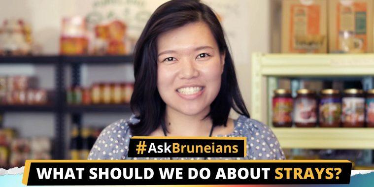 Ask Bruneians Strays